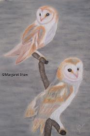 Barn Owl Encounter