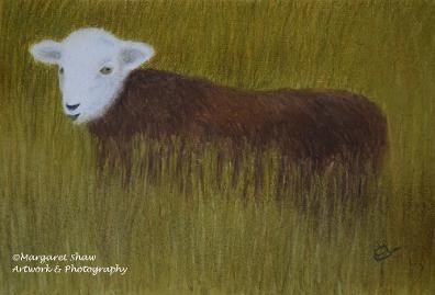 Young Herdy Long Grass