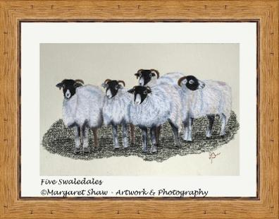 Five Swaledales
