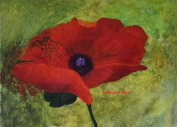 Bleeding Poppy