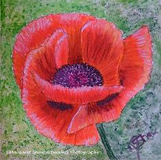 A poppy for Jim (my dad)
